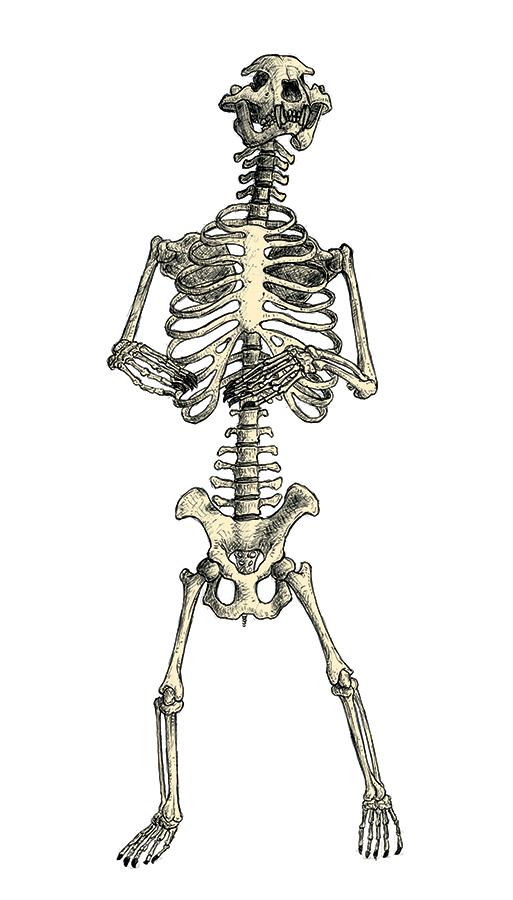 skelett-klein