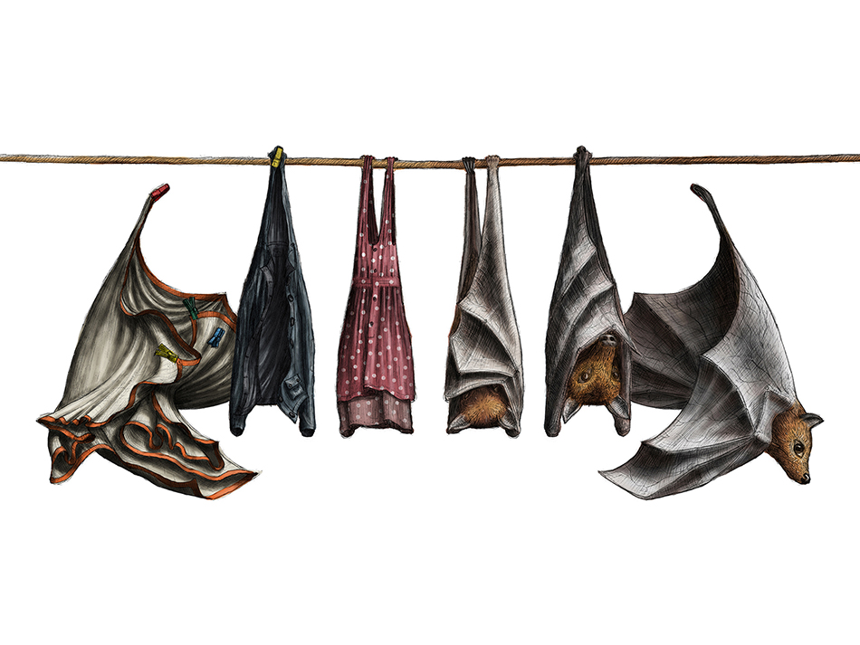 clothingline